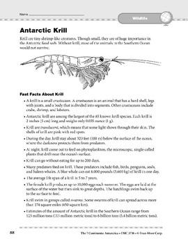 Antarctica: Wildlife: Krill