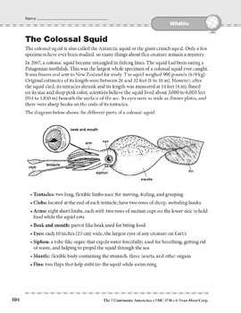 Antarctica: Wildlife: The Colossal Squid