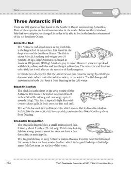 Antarctica: Wildlife: Three Fish