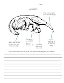 Anteater Graphic Sources