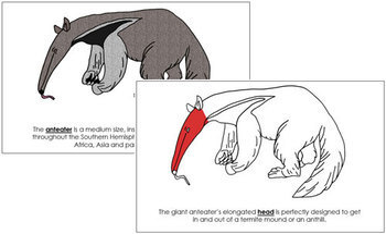 Anteater Nomenclature Book (Red)