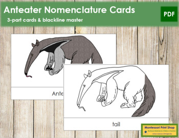 Anteater Nomenclature Cards