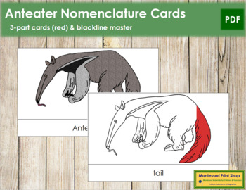 Anteater Nomenclature Cards (Red)