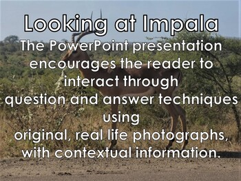 Antelope - The Impala Interactive Powerpoint