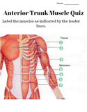Anterior and Posterior Trunk Muscle Labeling Quiz and KEY