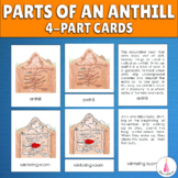Ant Colony Structure - Parts of an Anthill Montessori 4-part cards