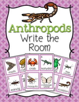 Anthropods Write the Room Activity