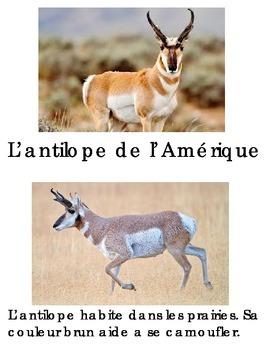 Animal book -Antilope d'Amerique