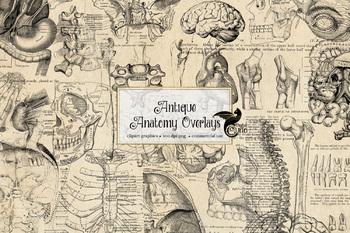 Antique Anatomy Overlays