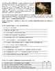 Antony and Cleopatra - The Story - Reading Comprehension Worksheet