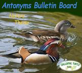 Antonym Bulletin Board