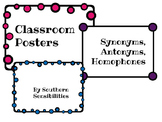Antonyms, Synonyms, and Homophones Posters **Freebie!**