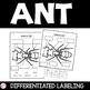 Ants- Life Cycle