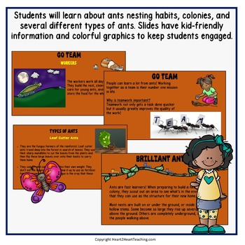 Ants PowerPoint - A Nonfiction Resource