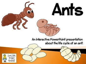 Ants ~ An Interactive Presentation of their Life Cycle