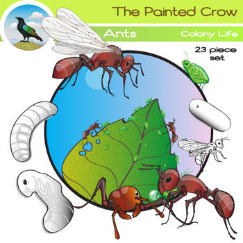 Ants Clip Art Set - Colony & Life Cycle Graphics - 23 Piece Color and Blackline