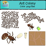 Ants Clipart (Color)