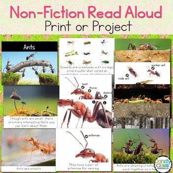 Ants Craft & Non-Fiction Read Aloud