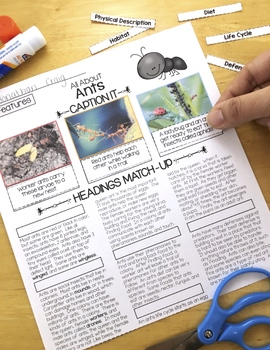 Ants Differentiated Passages with Vocabulary and Comprehension Activities