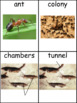 Ants: Informational Text and Writing Activity