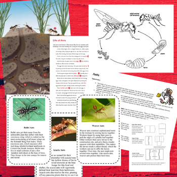 Ants! Interactive Lapbook Unit (1st - 4th Grades)
