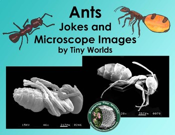 Ants Jokes and Scanning Electron Microscope Images