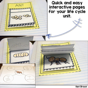 Interactive Notebook: Ant Life Cycle