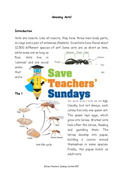 Ants Non-fiction Text Comprehension / Guided reading (4 levels difficulty)