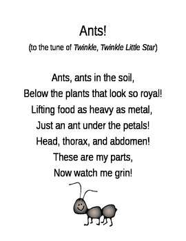 Ants Song