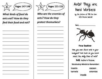 Ants! They Are Hard Workers Trifold - Imagine It 2nd Grade Unit 2 Week 1