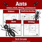 Printable Bugs: Units Study of Ants