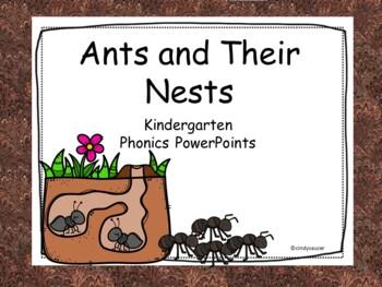 Ants and Their Nests, Interactive PowerPoint, Kindergarten