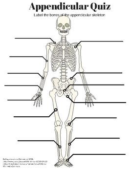 appendicular skeleton labeling quiz and key by amazing. Black Bedroom Furniture Sets. Home Design Ideas