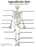 Appendicular Skeleton Labeling Quiz and KEY