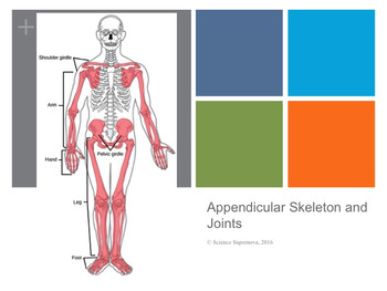 Appendicular Skeleton and Joints PPT