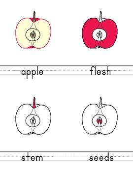 Apple - 3-part cards