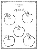 Apple 5 senses activity