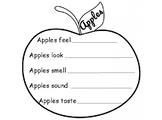 Apple - 5 senses publishing