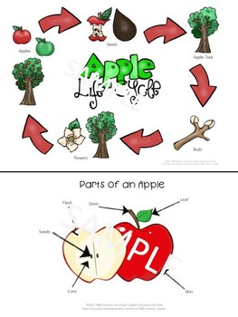 Apples Worksheets and Task Cards