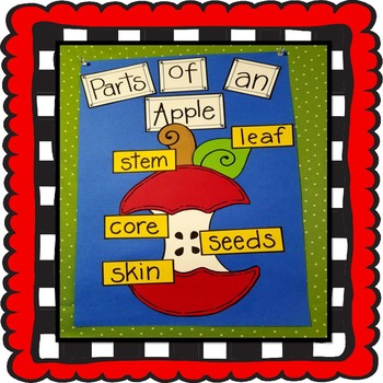 Parts Of An Apple Craft, Back to School Craft, Fall Craft