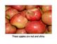 Apple Adjectives