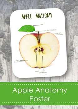 "Apple Anatomy 8x10"" Poster- Montessori- Parts of an Apple"