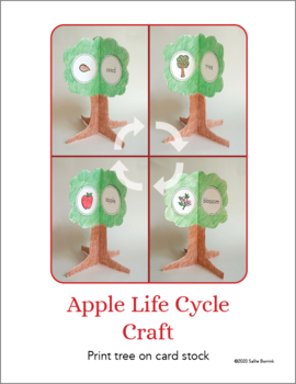 Apple Craft {Apple Life Cycle Craftivity}