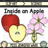 Apple Diagram Clip Art