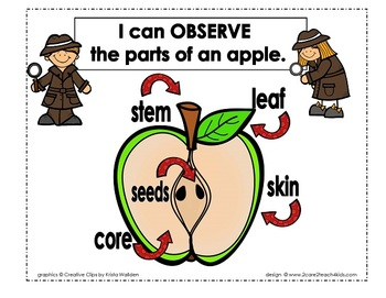 Apple Investigations- A mini- science unit