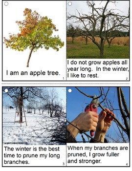 APPLES Life Cycle with Real Life Pictures
