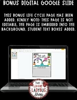 Apple Life Cycle Activity • Teach- Go Pennants™