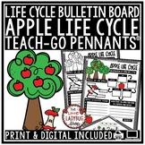 Apple Life Cycle Activity • Teach-Go Pennants