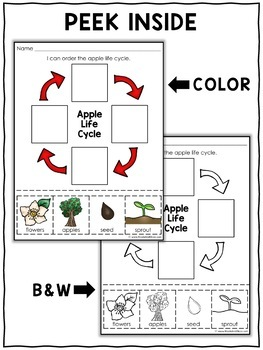 Apple Life Cycle Activities