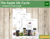The Apple Life Cycle 3-Part Cards & Charts - Montessori Nomenclature